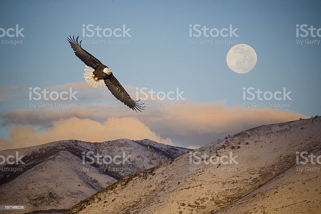 Eagle Flying in Front of the Mountain and Moon. stock photo