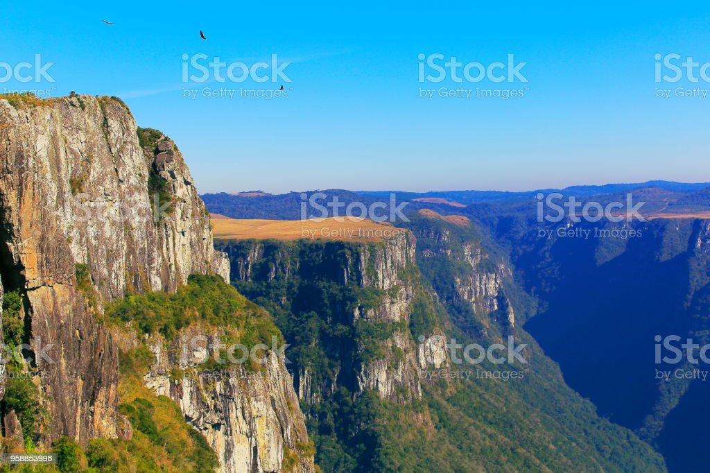 Eagle flying over impressive Fortaleza Canyon – Rio grande do sul -...