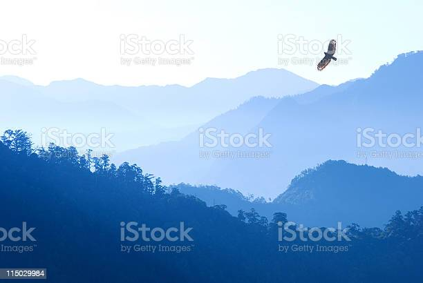 Eagle flying over mist mountains in the morning picture id115029984?b=1&k=6&m=115029984&s=612x612&h=sakaj wmndwh6 f0duvudupe4c3zkxuo9ezxiiyhiqc=