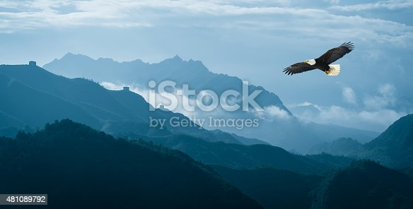 Eagle flying over mist mountains in the morning