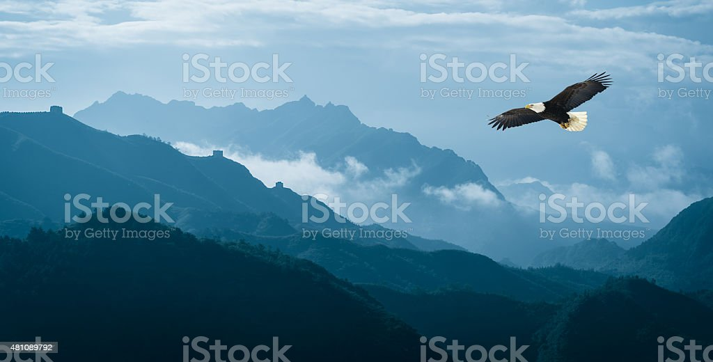 Eagle flying over mist mountains in the morning stock photo