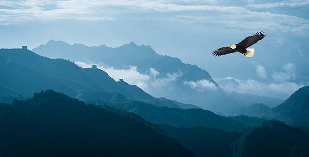 eagle flying over mist mountains in the morning - vloog stockfoto's en -beelden