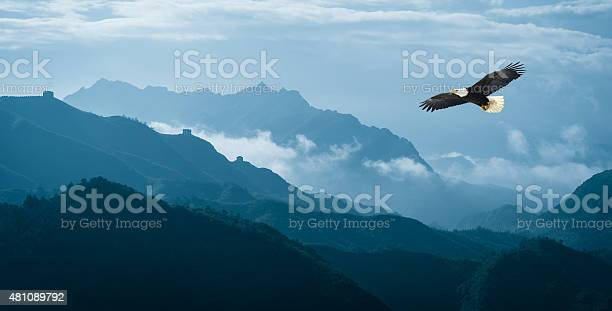 Photo of Eagle flying over mist mountains in the morning