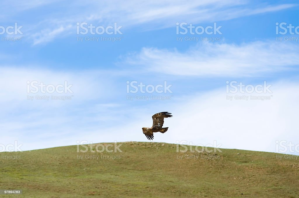 eagle flying over steppe royalty-free stock photo