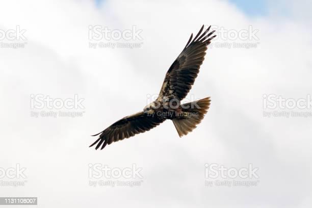 Photo of Eagle Flying