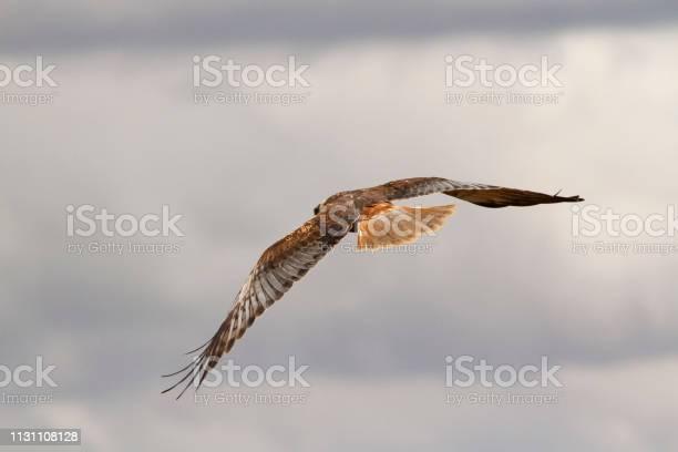 Eagle flying picture id1131108128?b=1&k=6&m=1131108128&s=612x612&h=n0ngv2uetlz7kip6ymcmx2sleoqbxvh1xw3xstmvtes=