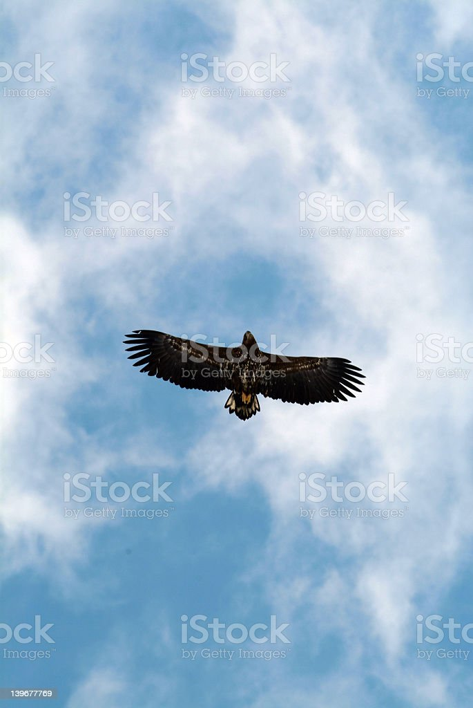 Eagle from below royalty-free stock photo