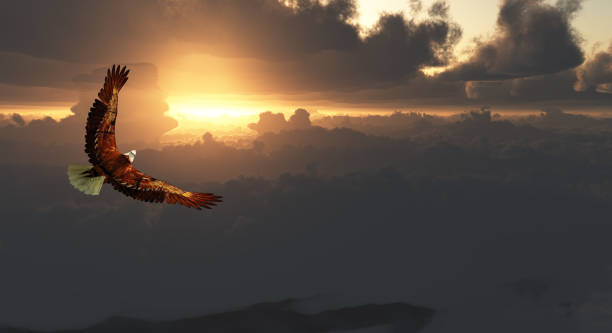 eagle in flight above dramatic cloudscape - eagle stock photos and pictures