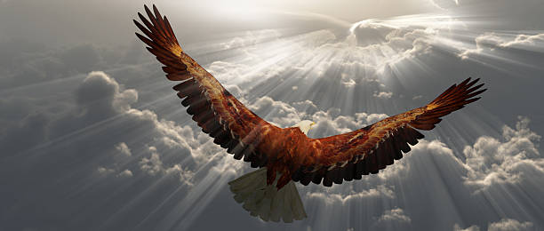 eagle in flight above the clouds - eagle stock photos and pictures