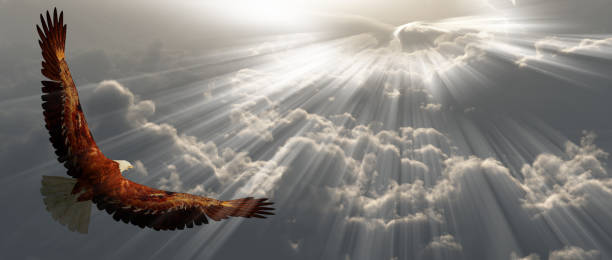 eagle in flight above tyhe clouds - eagle stock photos and pictures