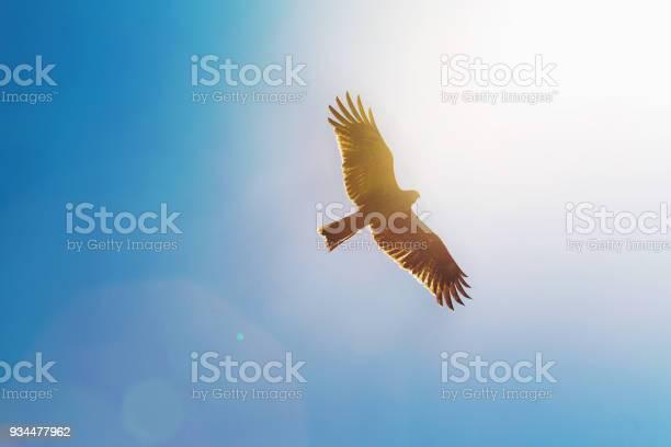 Eagle in sky sun shining picture id934477962?b=1&k=6&m=934477962&s=612x612&h=9peglolagzmeegk1u hn b64jscad92lcl2xufgdpbu=