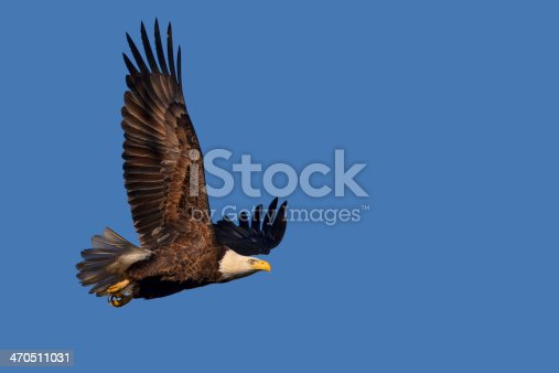 istock Eagle Isolated by Blue Sky 470511031