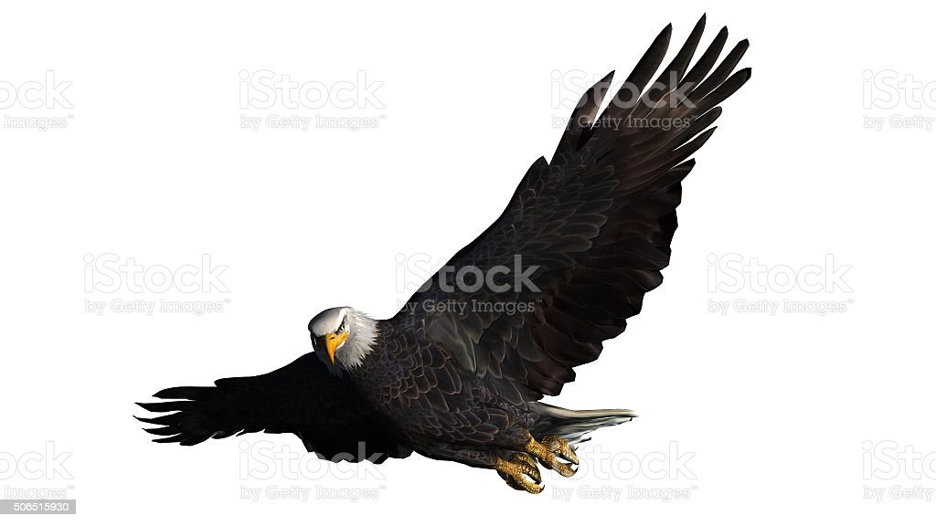 eagle isolated on white background stock photo