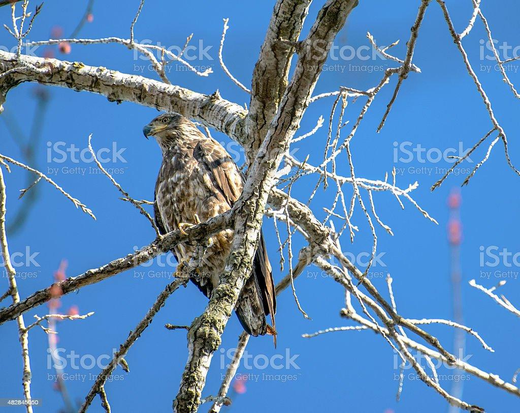 Eagle overlook stock photo