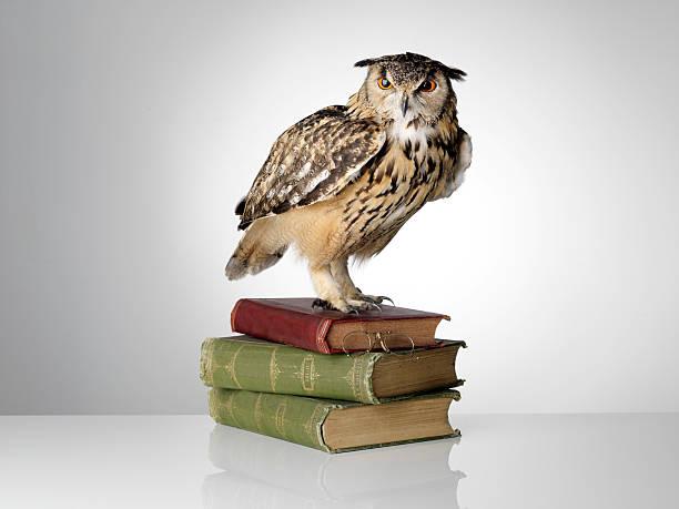 Eagle owl on books picture id179229880?b=1&k=6&m=179229880&s=612x612&w=0&h=ozlupr5rv0ovy2cfgqhrxsnqidj9sbk8rncpa78duym=