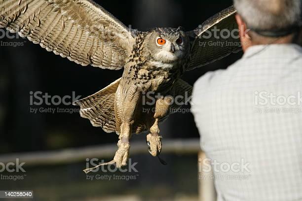 Eagle owl picture id140258040?b=1&k=6&m=140258040&s=612x612&h=a6cbnuqc9xokx9ejk38c7g 6re9hf le56s2yivqspa=
