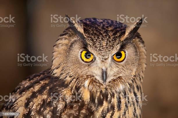 Eagle owl picture id155099622?b=1&k=6&m=155099622&s=612x612&h=tvrqkwudjc3ky3p8iwxvmwgzcl1oc 1o83pq3p0wwwc=