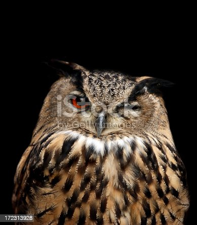 eagle owl isolated on black with one eye closed