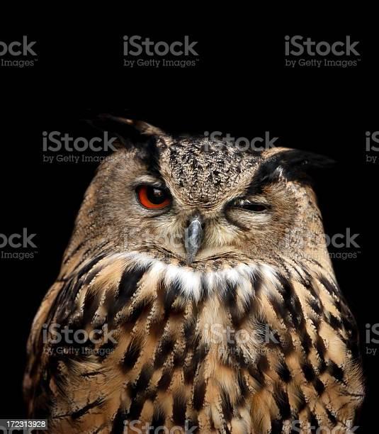 Eagle owl picture id172313928?b=1&k=6&m=172313928&s=612x612&h=uxh spw7gw hdsypeqsfzlqia2kt2kcjnrncjf9344y=
