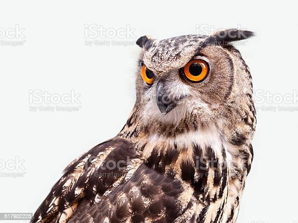 Eagle owl picture id517902225?b=1&k=6&m=517902225&s=612x612&h=iijzg2cha g9ngg1 m7cxs1cy9z1r1jvotj j1 reps=