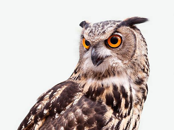 Eagle owl picture id517902225?b=1&k=6&m=517902225&s=612x612&w=0&h=fguvwn glhywmhlg7o3oqxrzy5adasues3 3ygyioru=