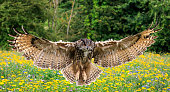 vector of owl spread wings