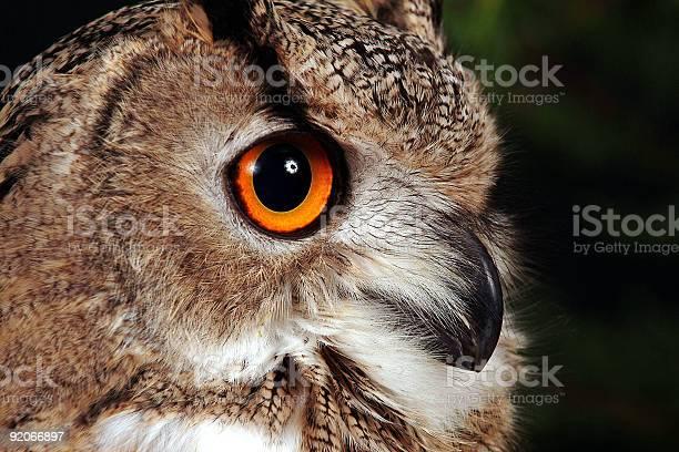 Eagle owl picture id92066897?b=1&k=6&m=92066897&s=612x612&h=a hdeg7jnc mfecnv3h3cl7qfjys9cuvyfam5aglwmq=