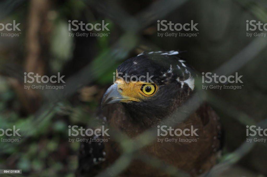 Eagle stock photo