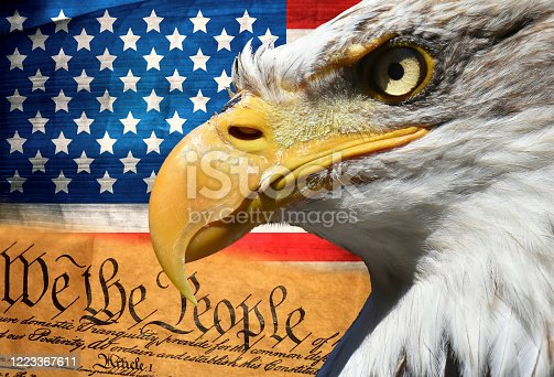Eagle portrait closeup symbol over usa or us stripes and stars flag and american constitution