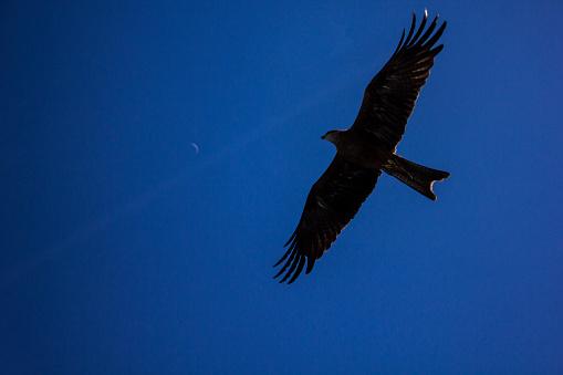 이 글 보고 달 날기에 대한 스톡 사진 및 기타 이미지