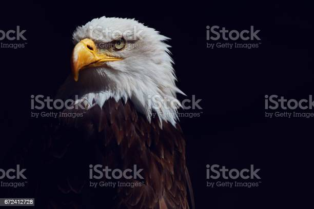 Eagle shot picture id672412728?b=1&k=6&m=672412728&s=612x612&h=ewjlypfoperx9faaefbvoumremkynktxv4wxfc0sucg=
