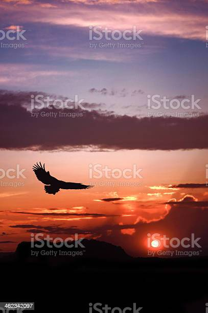 Eagle silhouette flying on dramatic sunset background picture id462342097?b=1&k=6&m=462342097&s=612x612&h=vb35fdq0jnav73si7jmpp6au6snxdoqs xdtiau9the=