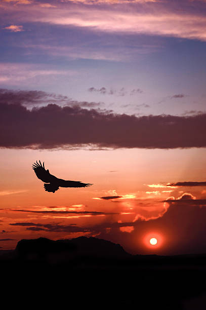 eagle silhouette flying on dramatic sunset background - falcon bird stock photos and pictures