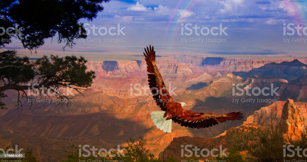 Eagle prend son envol plus Grand Canyon-Unis - Photo