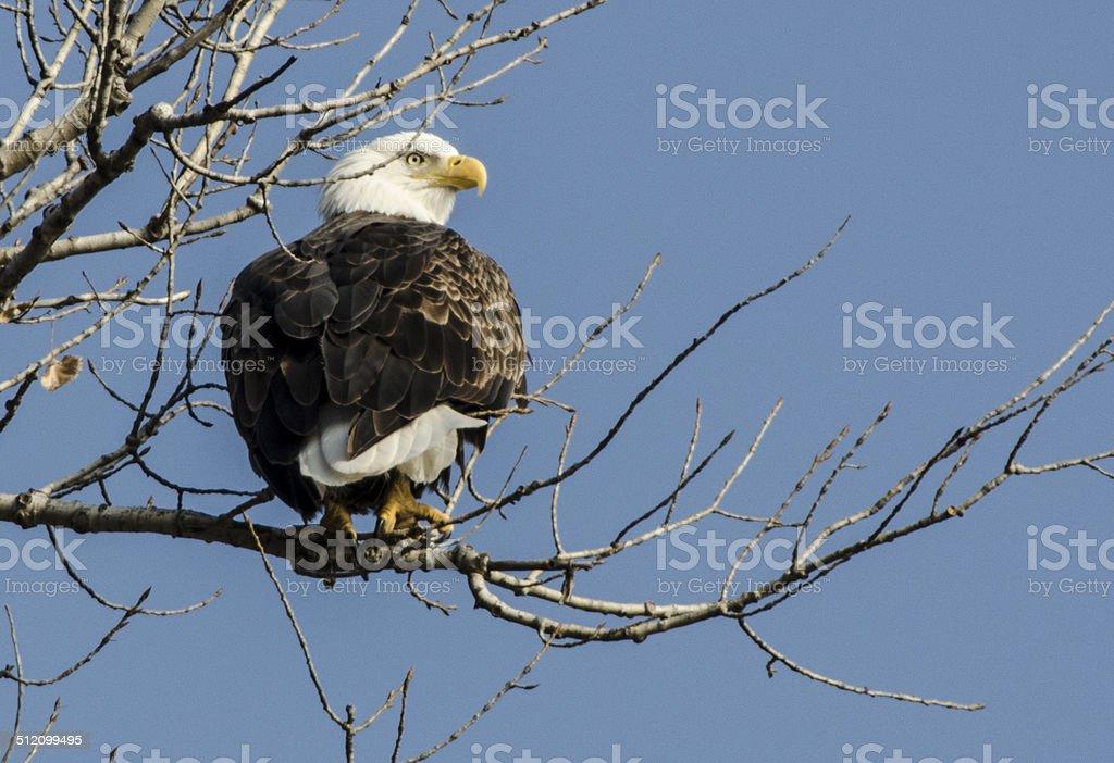 Eagle view stock photo