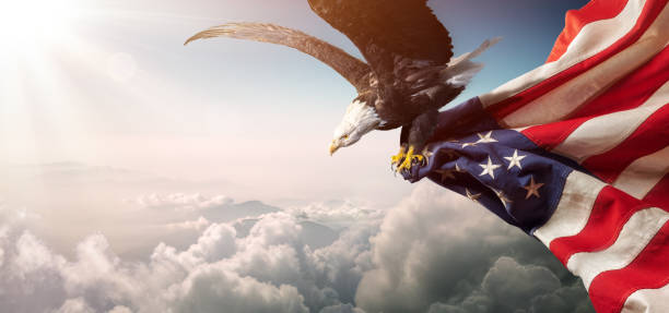Eagle With American Flag Flies In Freedom Eagle With American Flag Flies In The Sunny Sky american culture stock pictures, royalty-free photos & images