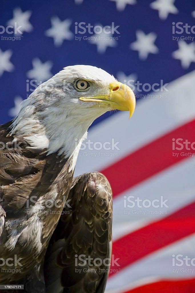Eagle with flag stock photo
