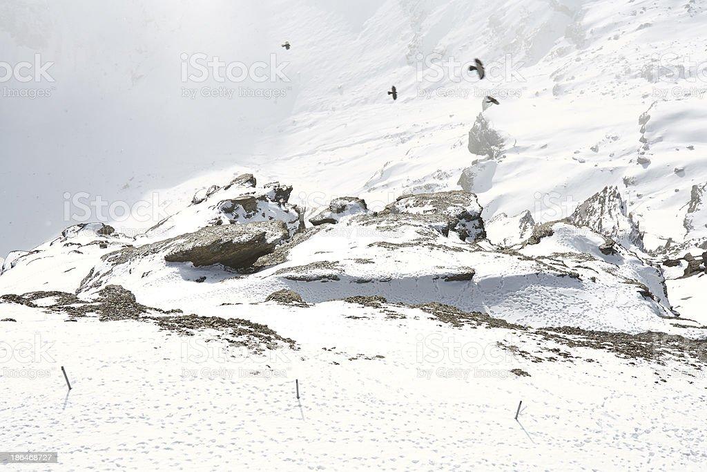 Eagles fly through the snowy mountains royalty-free stock photo