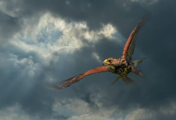 Adler im Flug unter den Wolken – Foto
