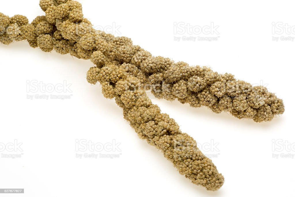 Ear of millet stock photo