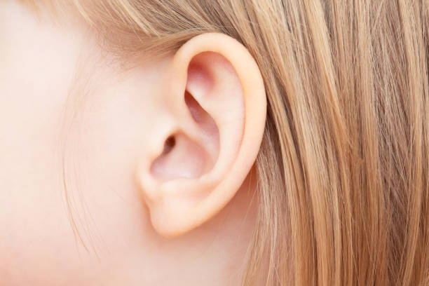 Royalty Free Left Auricle Pictures, Images and Stock Photos - iStock