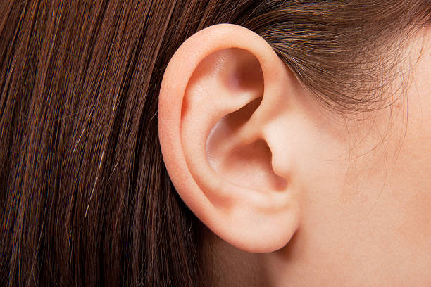ear - ear stock photos and pictures