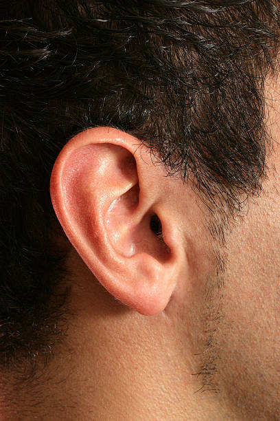Ear Close-up of a man's ear. human ear stock pictures, royalty-free photos & images