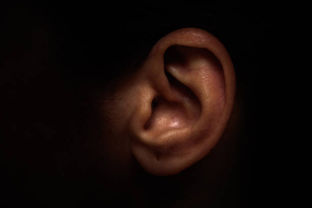 Ear Ear human ear stock pictures, royalty-free photos & images