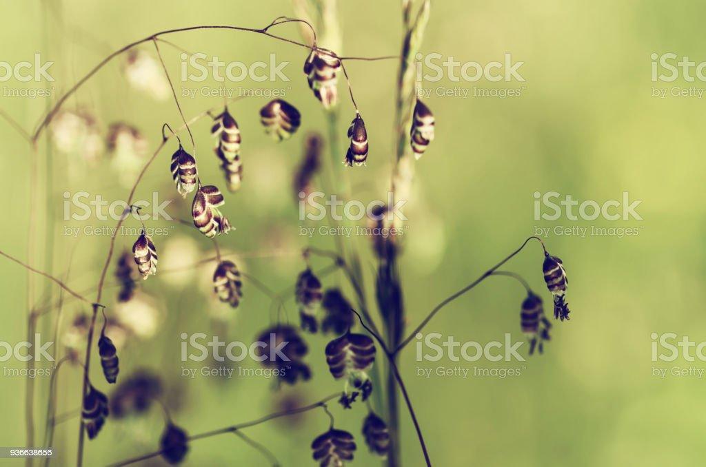 Ear sunny field stock photo