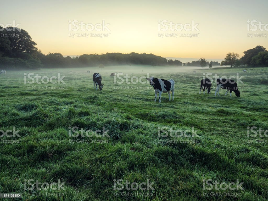 Early Autumn countryside morning,Northern Ireland stock photo