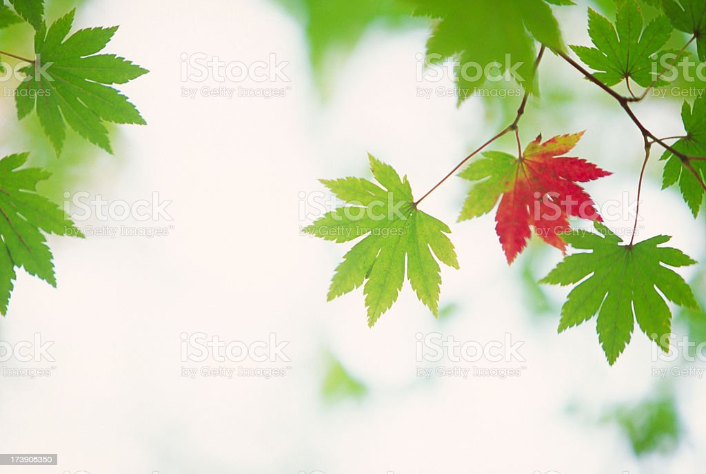 Early Autumn Leaves royalty-free stock photo