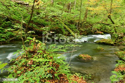 Oirase River and Gorge is a picturesque mountain stream in Aomori Prefecture, which is one of the most famous and popular destinations during the seasons of autumn colors and fresh greenery. Oirase Stream is the only river draining Lake Towada, a large caldera lake. About nine kilometer upper reaches of the stream forms a beautiful gorge with numerous rapids and waterfalls, constituting a part of Towada-Hachimantai National Park. It runs through a virgin forest rich in variety, including white cedar, Japanese beech, horse chestnut, Japanese oak and maple trees. There is nature trail along the stream, from which you can observe the beauty of nature, such as green vegetation, ripples of the river, rocks covered with plants and moss poking above the rapids.
