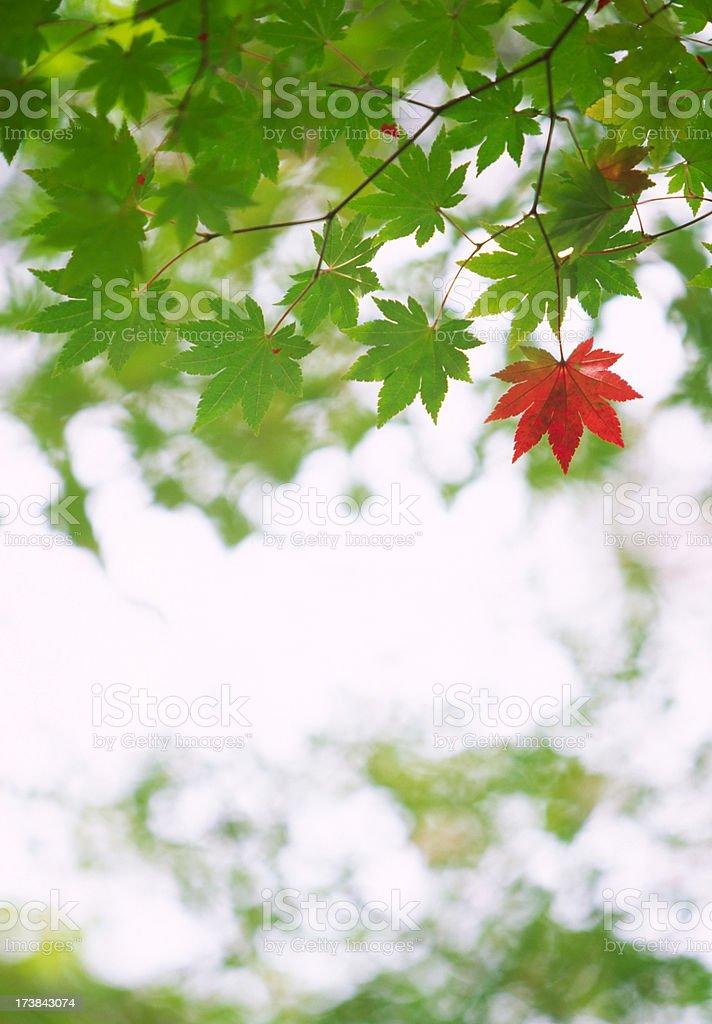 Early Autumn royalty-free stock photo