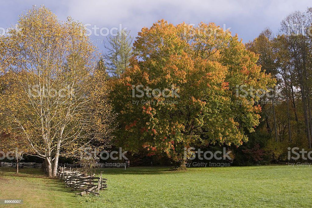 Early Autumn Tree royalty-free stock photo